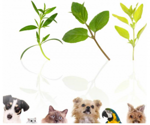 duftmedizin für tiere